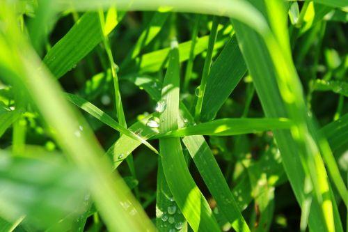 grass meadow rush
