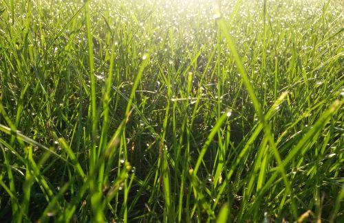 grass garden nature