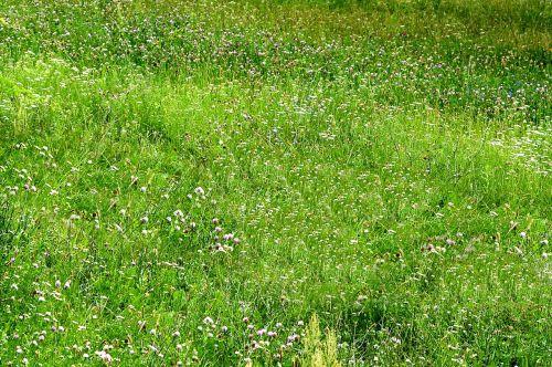 Free photos meadow grass search, download - needpix com