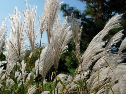 grass nature wind
