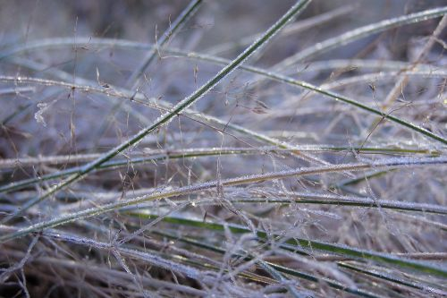 grass frost ground frost