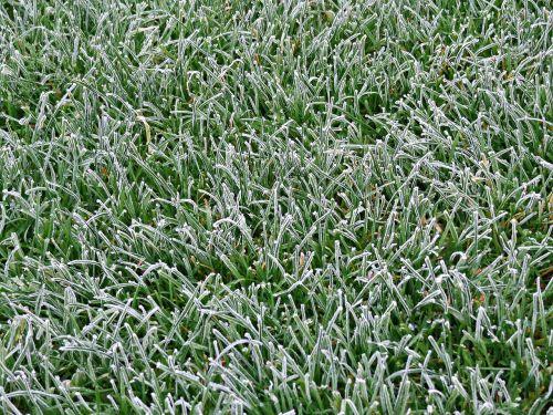 grass lawn green