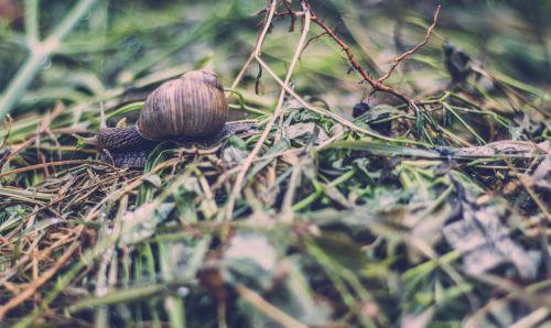 grass macro mollusk