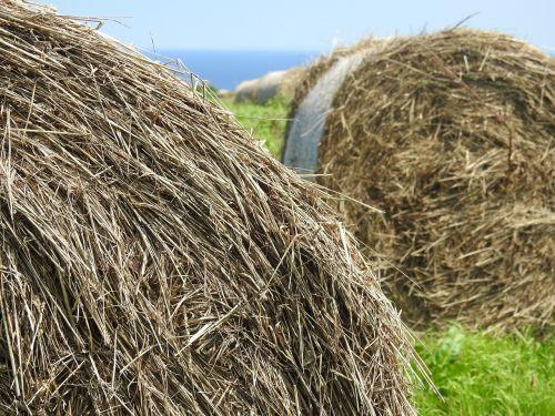 grass straw ranch