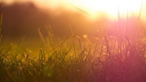 žolė,saulė,pieva,saulėlydis,romantika,gamta,Uždaryti,atgal šviesa,kraštovaizdis,abendstimmung,žolės,augalas
