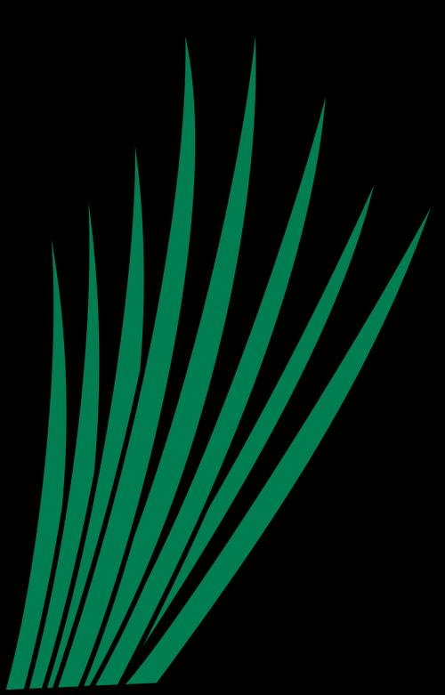 grass leaf leafy
