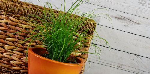 grass water hyacinth basket