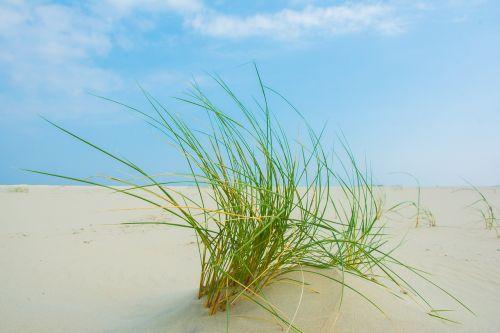 grass borkum beach
