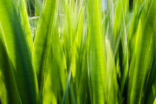 grass halme blurred