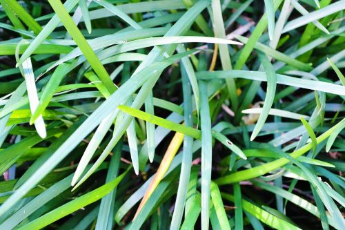 grass abstract nature