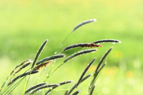 grass meadow raindrop