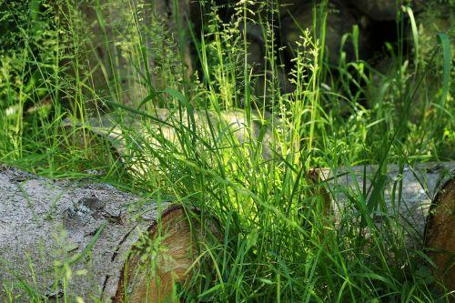 grass nature green