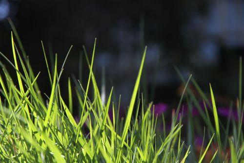 grass spring nature