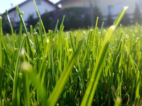 grass rush blade of grass