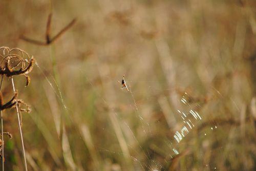 žolė,voras,afrika,Namibija,laukinė gamta,dėmesio,fotografija,gamta