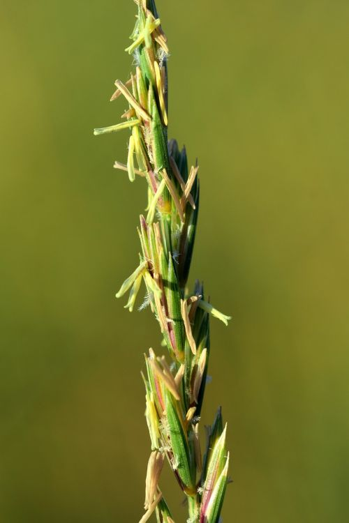 grass wild grass grasses