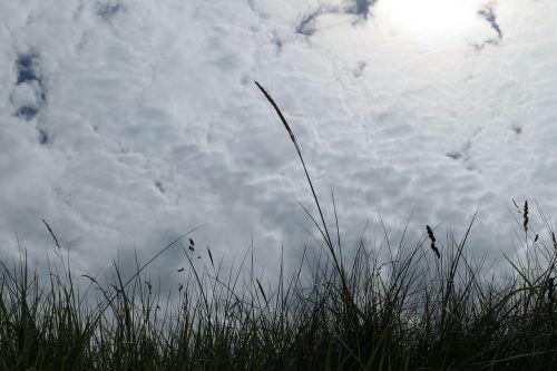 grass dune grasses