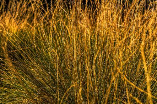 grass summer almgräser