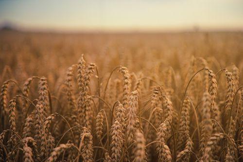 grass farm agriculture