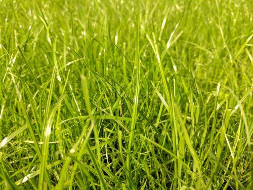 grass green lawn