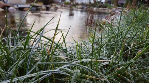 grass frozen cold