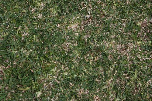 grass texture background