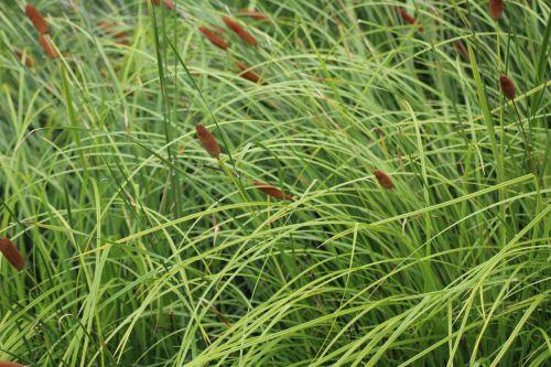 grass nature a grass