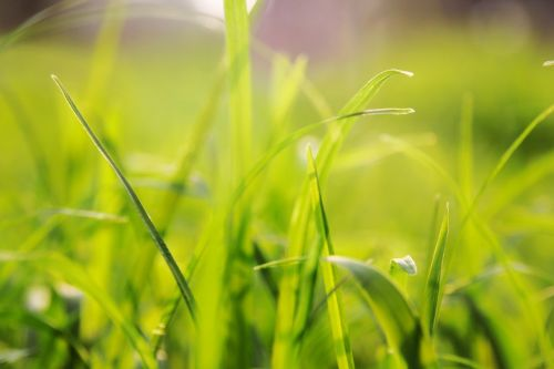 grass background solid