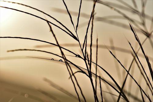 grass blade of grass back light