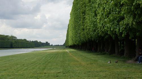 grass tree trellis