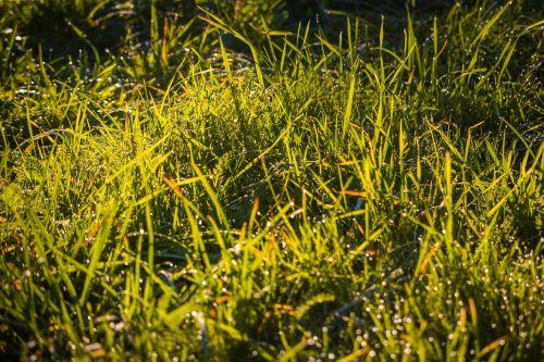 žolė,rasa,žalias,makro,gamta,lašai,rasos lašas,rasos rasos,lakštas,veja,detalus,kraštovaizdis
