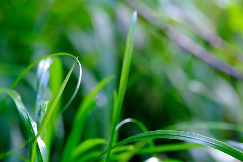 grass blades of grass nature