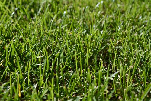 grass green rush