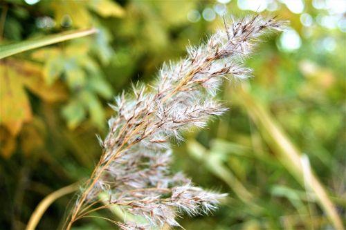 grass dry heave