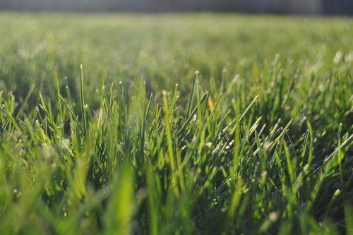 grass lawn summer