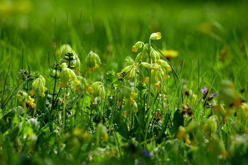 grass flower meadow plant