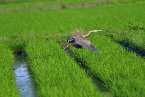 grass natural field