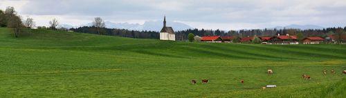 grass nature panorama