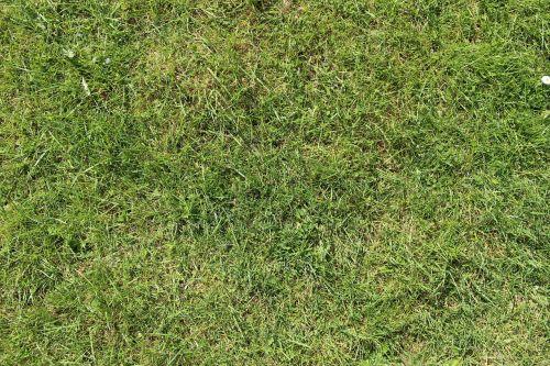 grass rush meadow