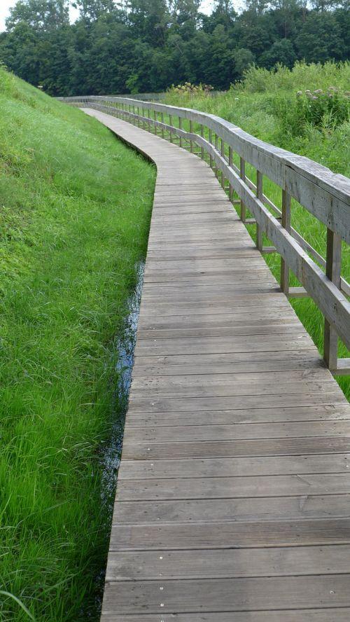 grass nature summer