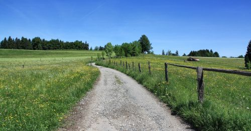 grass nature landscape