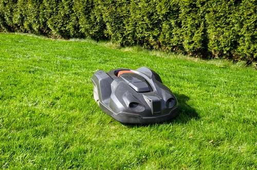 grass  rush  summer
