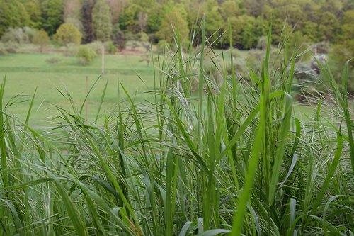 žolė, meadow, žalias, kraštovaizdis, žolė pieva, pavasaris, žolės, ašmenys žolės, sultinga, struktūra, aukštos žolės, halme, žalia žolė, miškas, Bokeh, pobūdį, laukas, laisvos, Žaidimas žolė, ant žemės, žydi, sezonas, kaimo, tylus, grūdai, ganyklos, žolė žalia, antrekoto pievos, Žemdirbystė