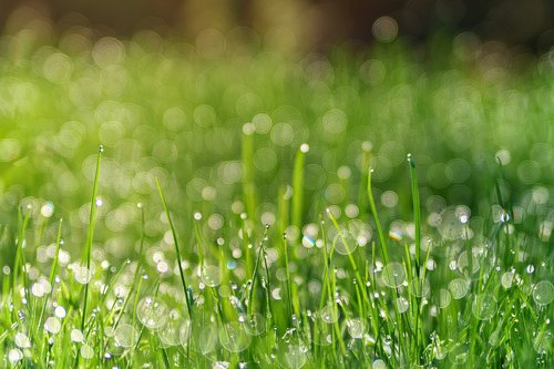 grass  meadow  dew