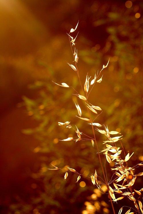 grass  light  lit