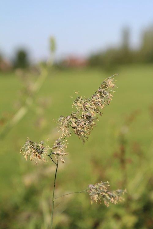 grass  grasses  wild grasses