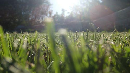 grass straws sun