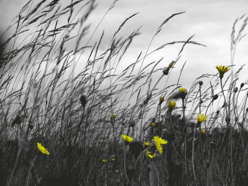 grass field windy