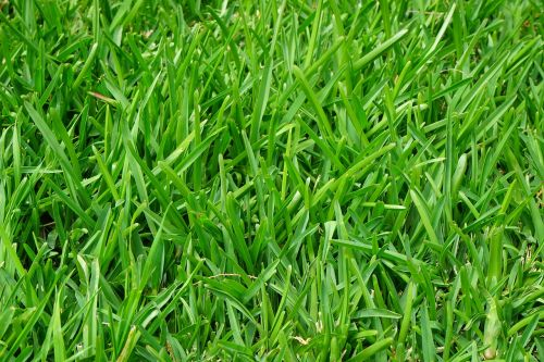 grass rush juicy