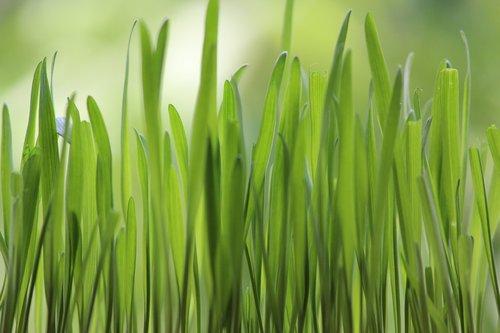 grass  nature  greens